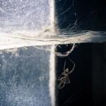 Beperkte scherpte-diepte met dode spin